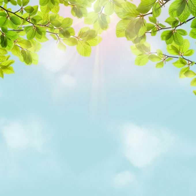夏天夏日正午强烈阳光照射下的树冠绿色树叶装饰边框2754770免抠图片素材