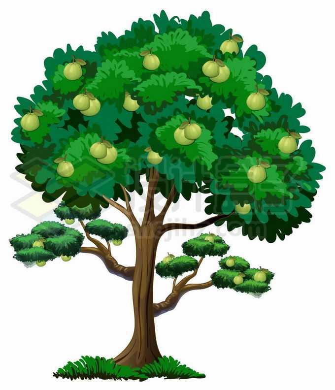 长满青色果实的卡通苹果树6382147矢量图片免抠素材免费下载