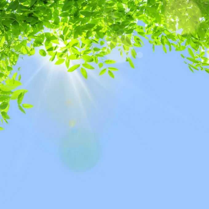 夏天夏日中午阳光照射下的树冠绿色树叶装饰边框6867950免抠图片素材