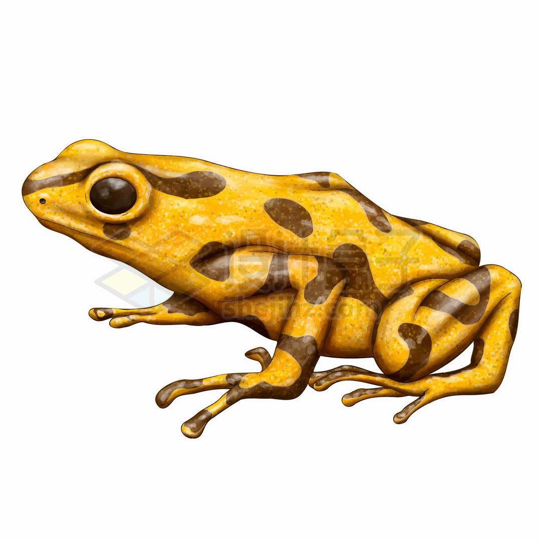 黄色的青蛙黄蛙林蛙有毒青蛙野生动物两栖动物6091354矢量图片免抠素材