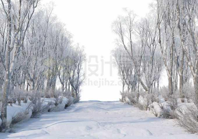 冬天厚厚积雪覆盖的树林森林大树和林间小路道路风景7649509免抠图片素材免费下载