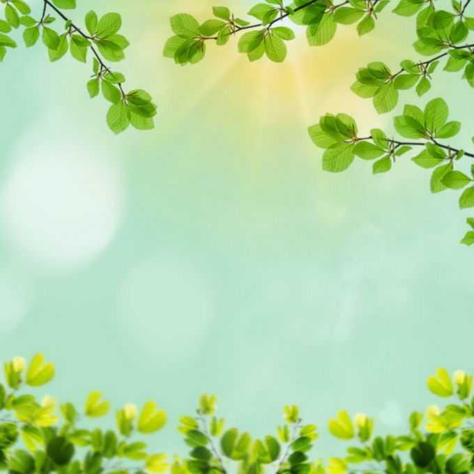 夏天夏日中午阳光照射下的树冠绿色树叶装饰边框4399667免抠图片素材