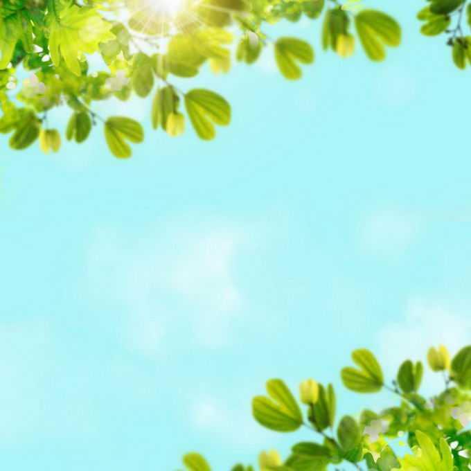 夏天夏日中午阳光照射下的树冠绿色树叶装饰边框2969221免抠图片素材