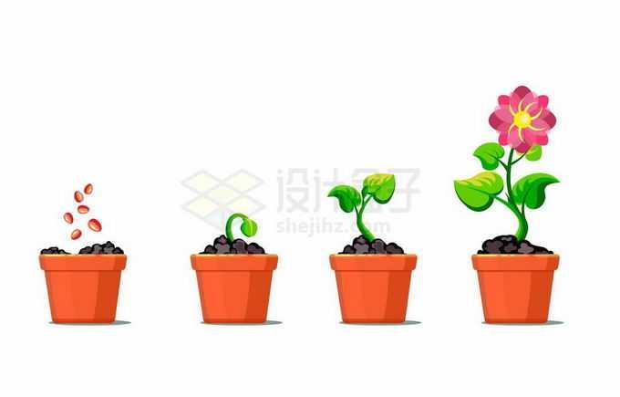 从种子到发芽要开花的花盆盆栽花朵植物1000657矢量图片免抠素材免费下载