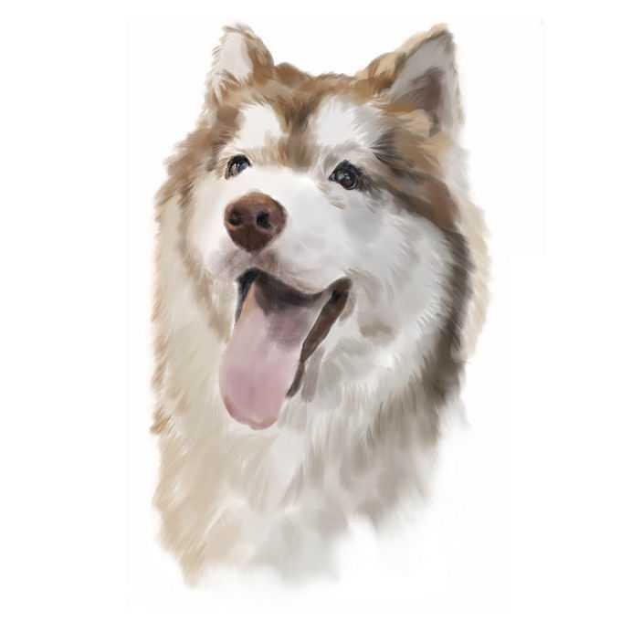 可爱的阿拉斯加犬哈士奇犬宠物狗狗头部水彩画插画5736518矢量图片免抠素材