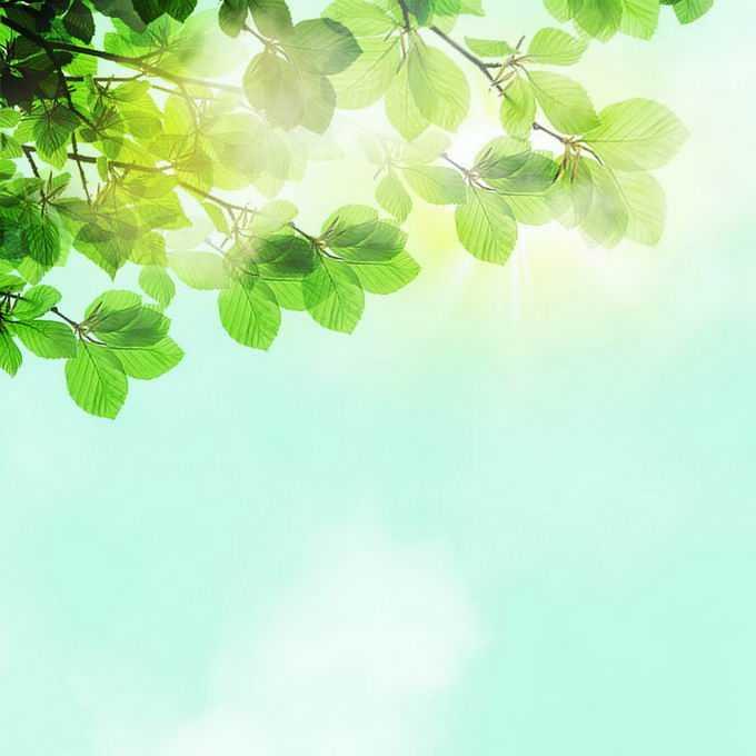 夏天夏日正午阳光照射下的树冠绿色树叶装饰8302316免抠图片素材