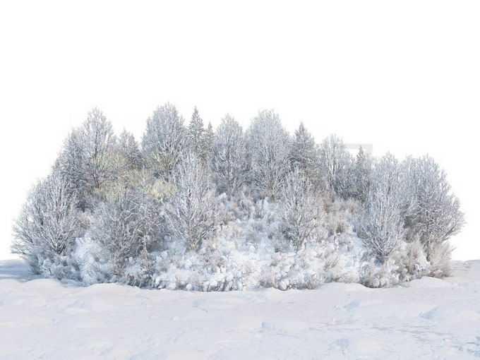 冬天厚厚积雪覆盖的树林森林草丛风景3963991免抠图片素材免费下载