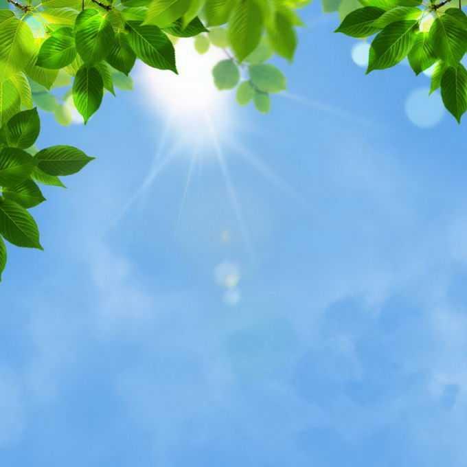 夏天夏日正午阳光照射下的树冠绿色树叶装饰7992791免抠图片素材