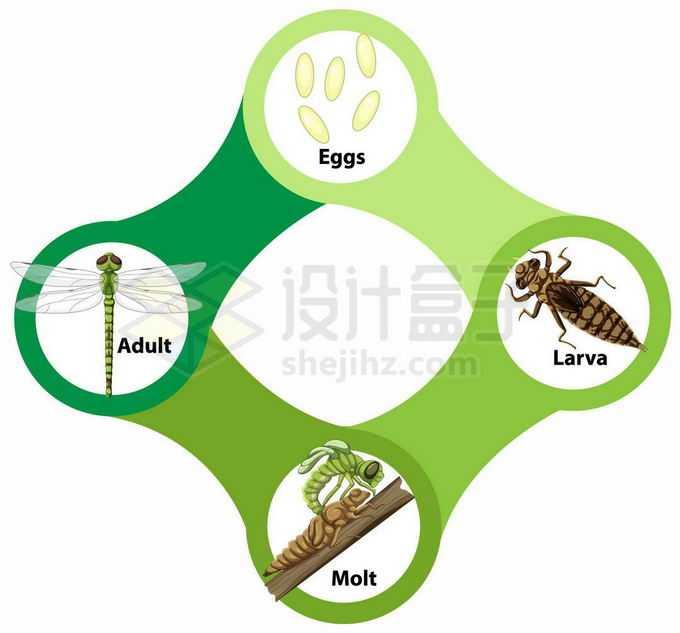 蜻蜓的生命周期:卵,水虿幼虫和成虫生物课插画3656343矢量图片免抠素材免费下载