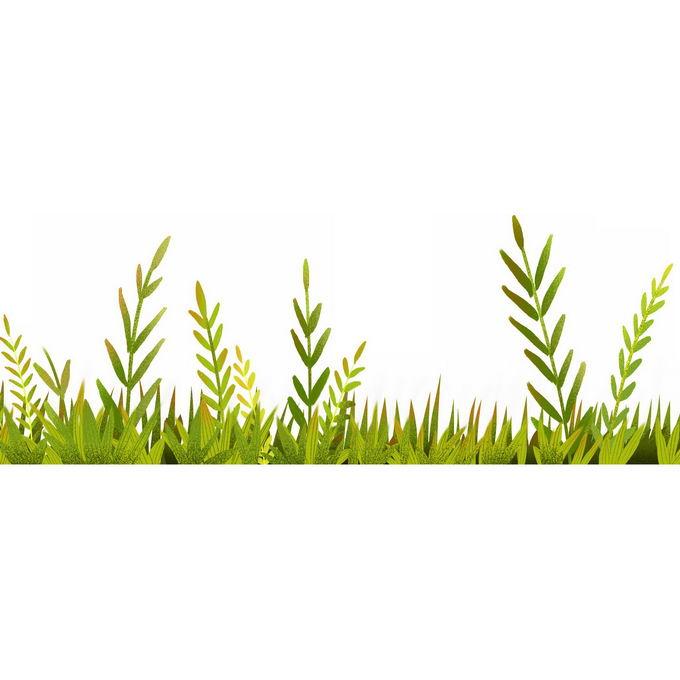 翠绿色的草地草丛装饰8275543免抠图片素材 生物自然-第1张