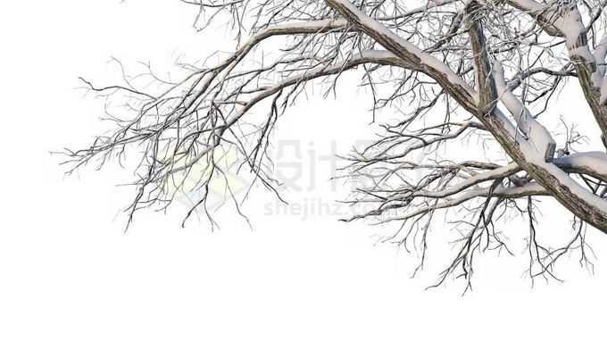 冬天下雪后的积雪大树枯树枝3831832免抠图片素材免费下载