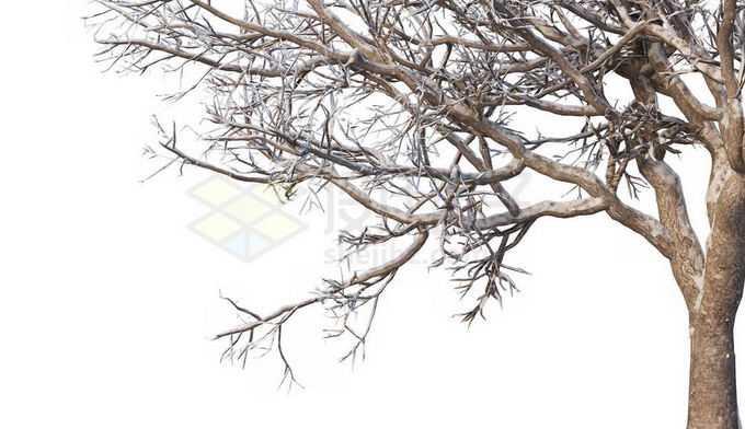 冬天下雪后的积雪大树枯树枝1174725免抠图片素材免费下载