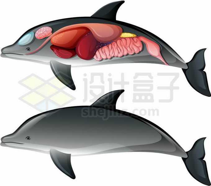 海豚内脏器官解剖图1490131矢量图片免抠素材免费下载