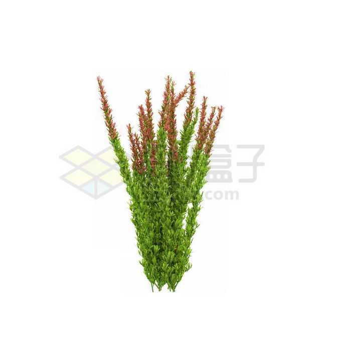 一款3D渲染开花的蛇鞭菊杂草丛观赏植物绿植7265255免抠图片素材