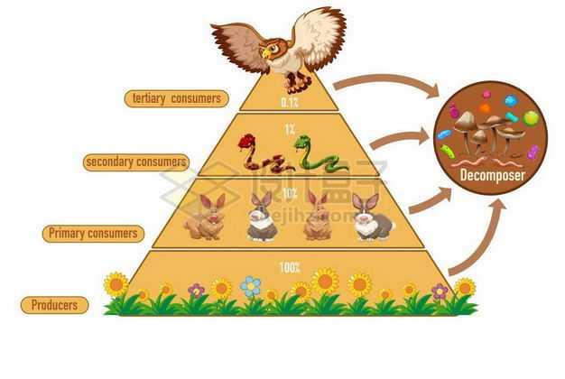 一款生态金字塔生产者食草动物食肉动物顶级捕食者和分解者生物学插画6934452矢量图片免抠素材