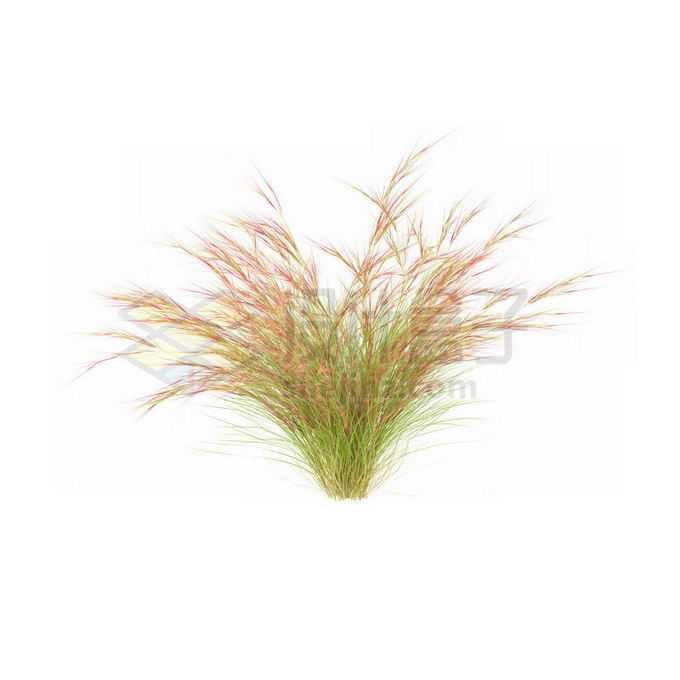 一款3D渲染的蒲苇野草丛茅草观赏植物绿植6680493免抠图片素材