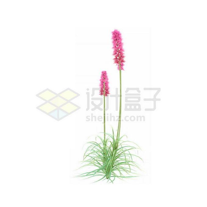 一款3D渲染的薰衣草香水植物草丛观赏植物绿植9443499免抠图片素材 生物自然-第1张