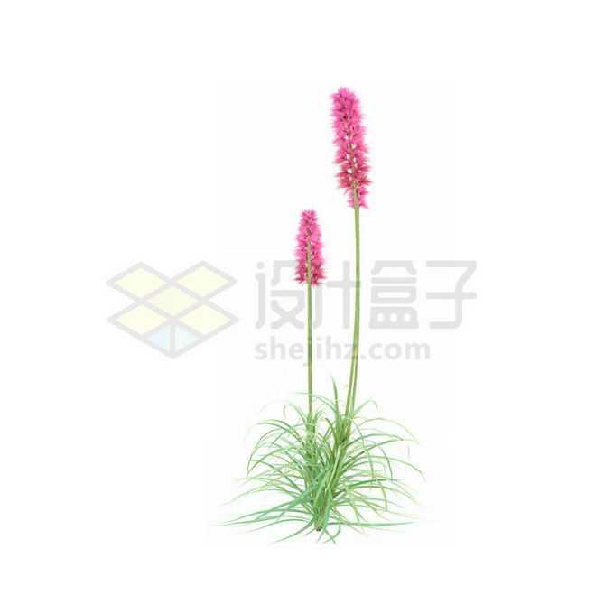 一款3D渲染的薰衣草香水植物草丛观赏植物绿植9443499免抠图片素材