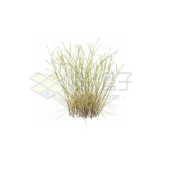 一款3D渲染的麻黄杂草野草丛7271381免抠图片素材