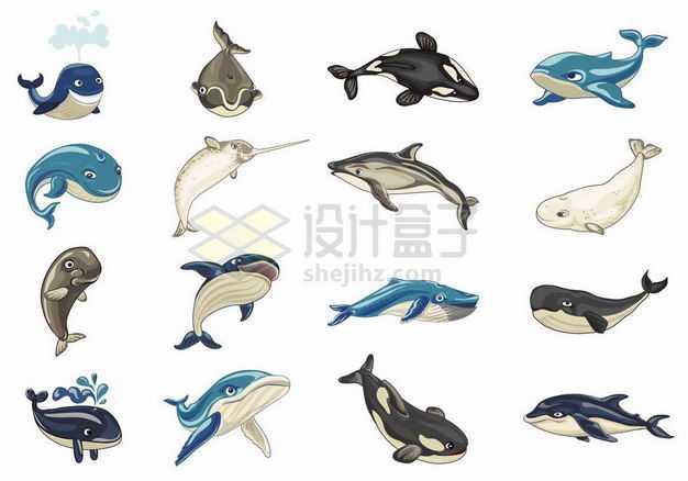 卡通鲸鱼蓝鲸海豚虎鲸独角鲸白鲸等海洋哺乳动物2241274矢量图片免抠素材