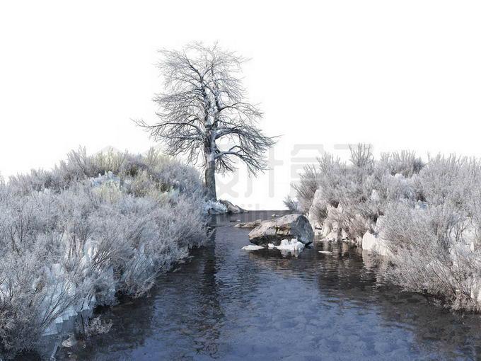 冬天被积雪覆盖的灌木丛和大树以及潺潺流水的小河小溪风景5507354免抠图片素材免费下载 生物自然-第1张