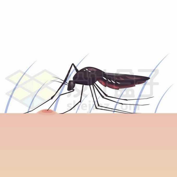 一只蚊子趴在手臂上吸血有一个大包8848392矢量图片免抠素材免费下载