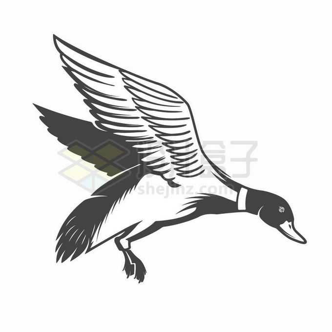飞行中拍动翅膀的鸭子野鸭黑色线条插画2424577矢量图片免抠素材
