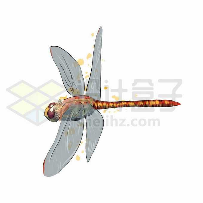 一只红色的蜻蜓昆虫写实风格水彩插画9021355矢量图片免抠素材免费下载
