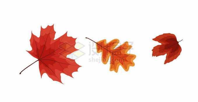 3款红色的枫叶秋天树叶落叶8726427矢量图片免抠素材