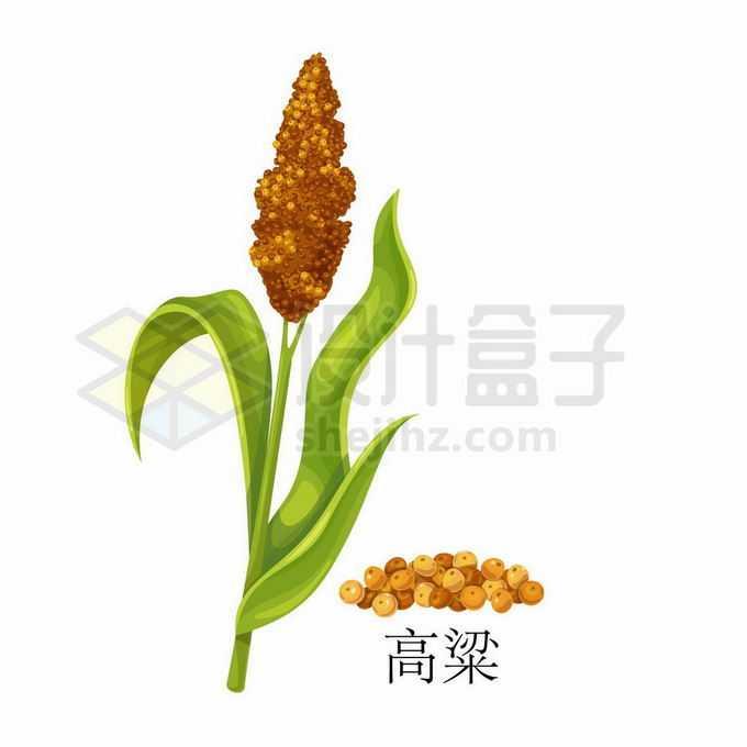 高粱种子粮食农作物彩绘配图2480834矢量图片免抠素材