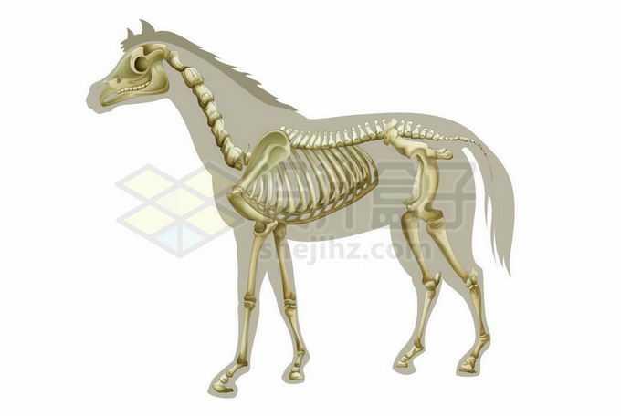 一批骏马骨骼结构示意图6311611矢量图片免抠素材免费下载