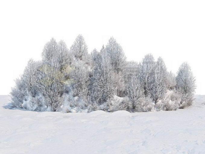 冬天被积雪覆盖的雪原上的灌木丛和树林风景2768264免抠图片素材免费下载 生物自然-第1张