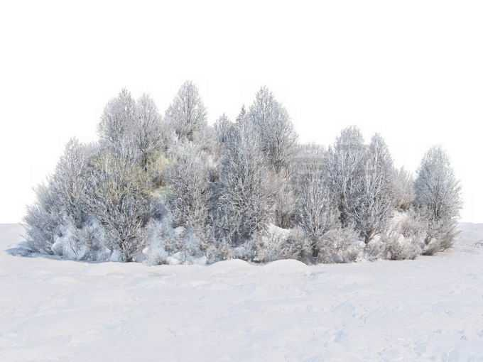 冬天被积雪覆盖的雪原上的灌木丛和树林风景2768264免抠图片素材免费下载