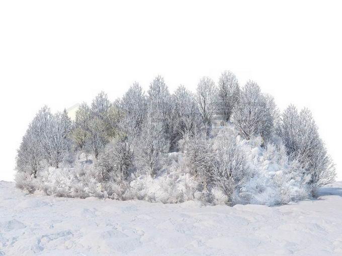 冬天被积雪覆盖的雪原上的灌木丛和树林风景6693521免抠图片素材免费下载 生物自然-第1张