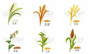 各种粮食农作物图片