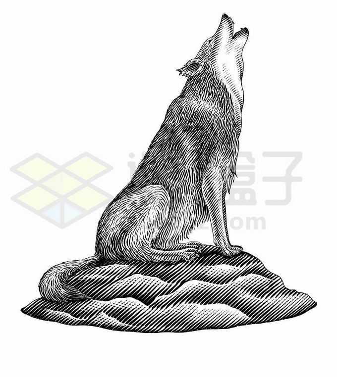 仰天长啸的野狼嚎手绘插画5617769矢量图片免抠素材免费下载