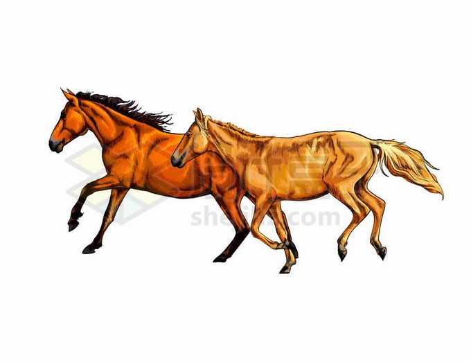 两匹奔跑中的金色骏马写实风格水彩插画5571626矢量图片免抠素材免费下载