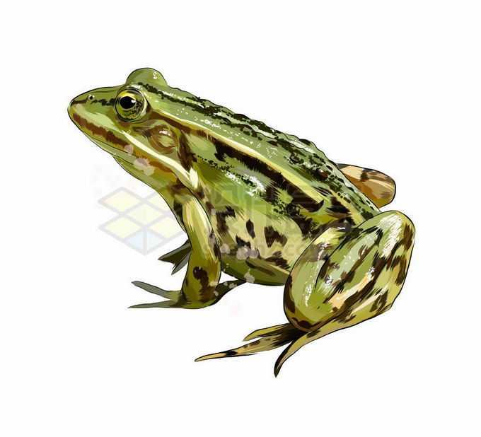 一只绿色的青蛙两栖动物3735098矢量图片免抠素材