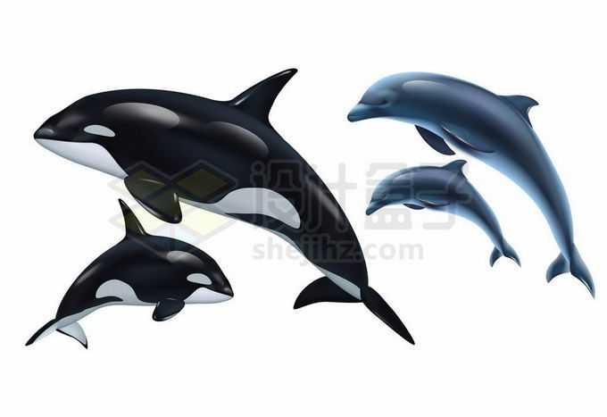 逼真的虎鲸和海豚海洋哺乳动物4115958矢量图片免抠素材免费下载