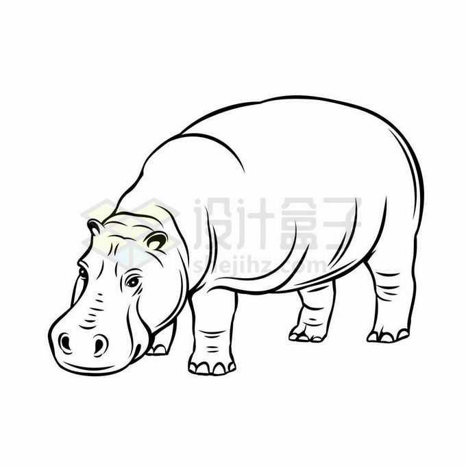 一只河马手绘线条野生动物1138753矢量图片免抠素材