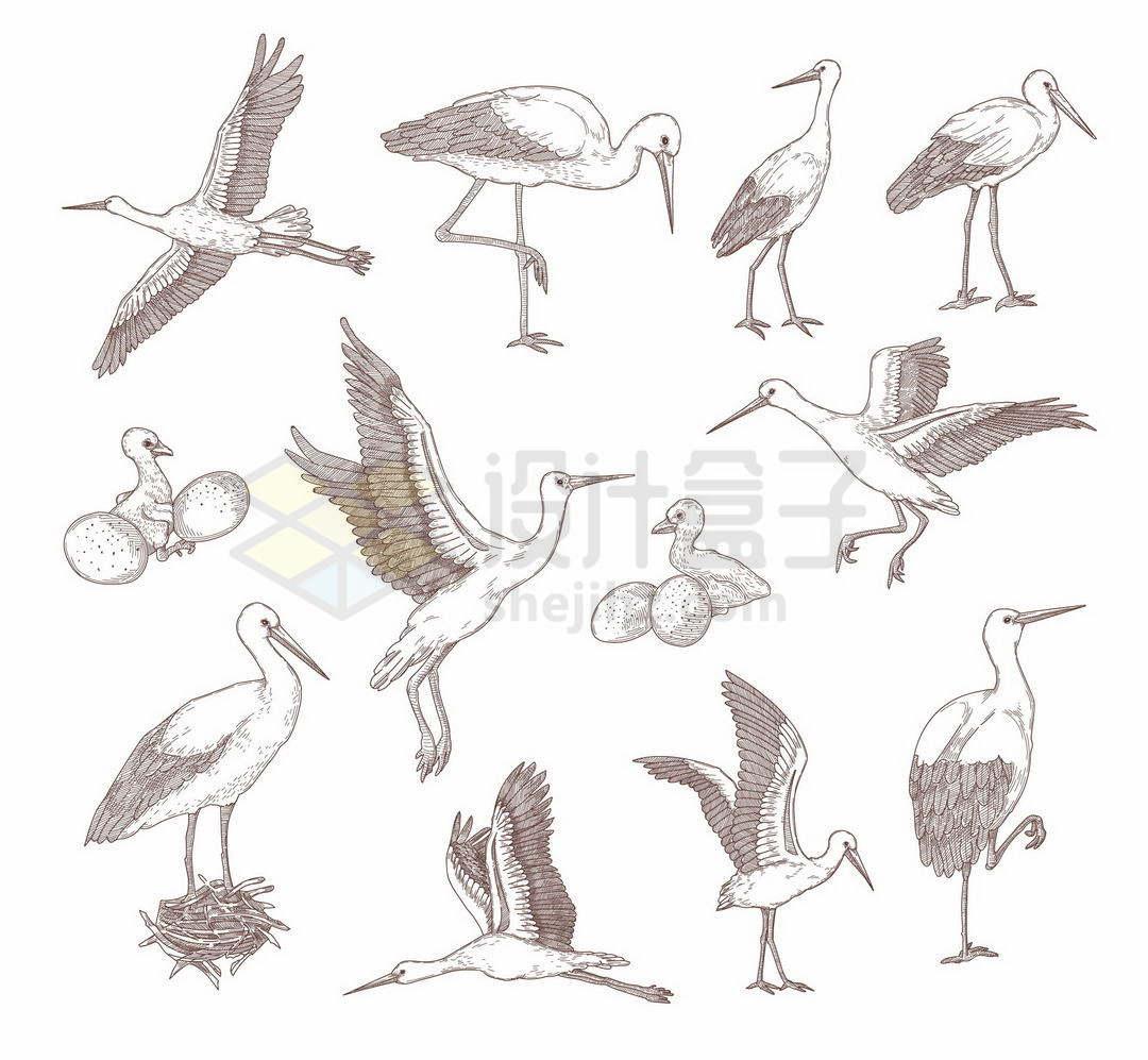 手绘线条风格的蓑羽鹤鸟类插画1708083矢量图片免抠素材