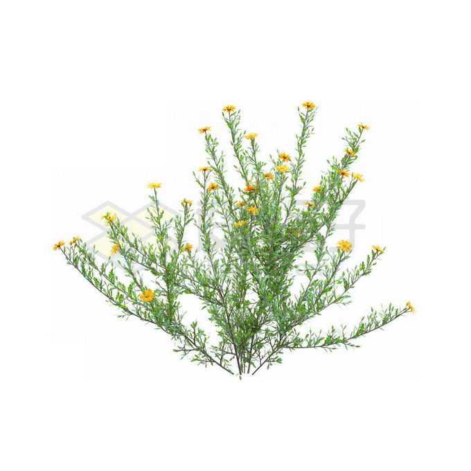 一款3D渲染的盛开黄色小花蓼子朴绿植观赏植物灌木丛6785753免抠图片素材