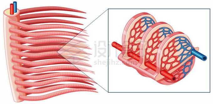 鱼鳃结构和工作原理图8865933矢量图片免抠素材免费下载