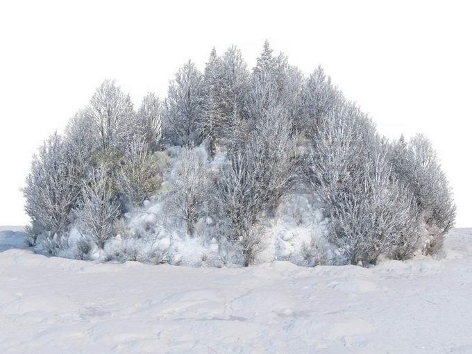 冬天被积雪覆盖的雪原上的灌木丛和树林风景5242781免抠图片素材免费下载 生物自然-第1张