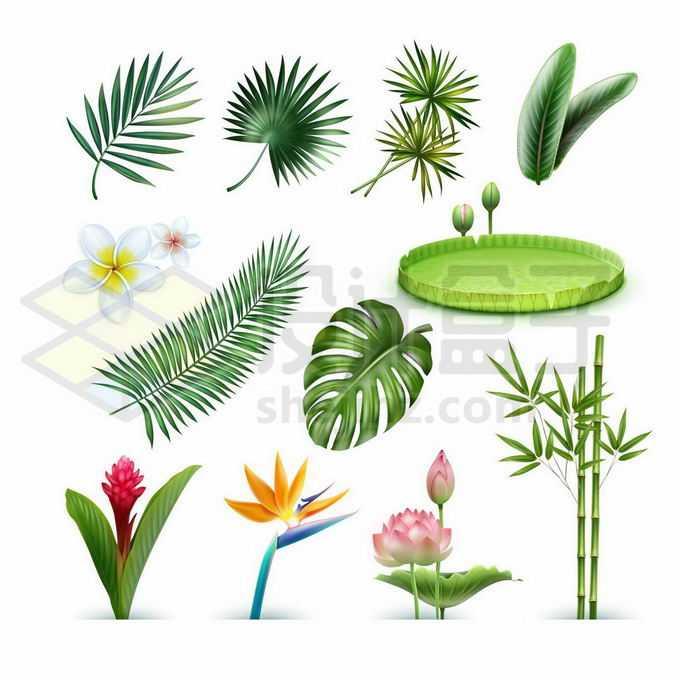 各种热带雨林植物的树叶睡莲王莲叶荷花竹子等9121689矢量图片免抠素材免费下载