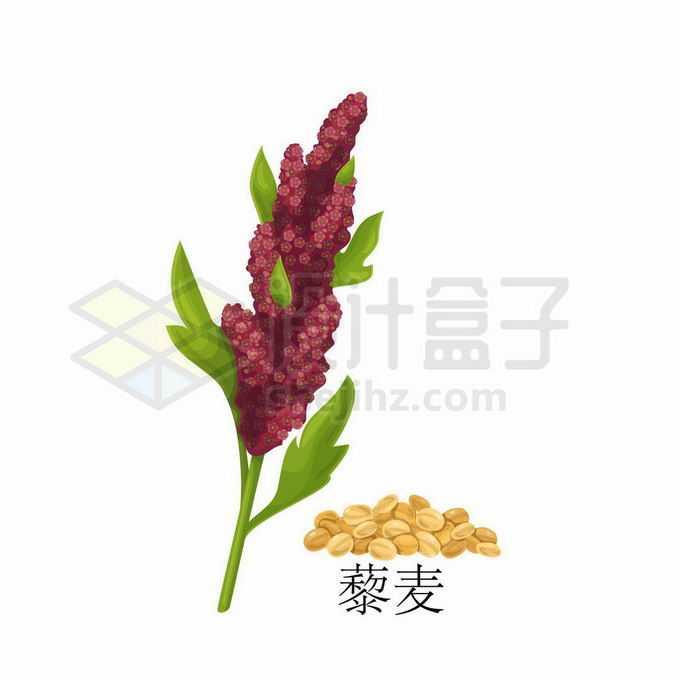藜麦种子粮食农作物彩绘配图6328827矢量图片免抠素材