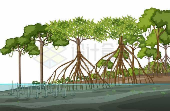 水边的红树林热带雨林9191902矢量图片免抠素材免费下载