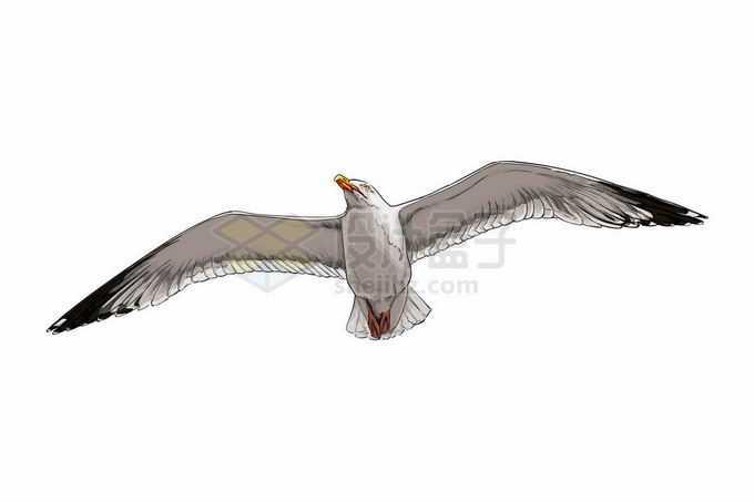 一只展翅高飞的海鸥海鸟6383919矢量图片免抠素材