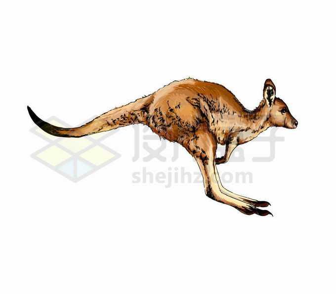 一只疯狂跳跃中的澳大利亚大袋鼠写实风格水彩插画7688565矢量图片免抠素材免费下载