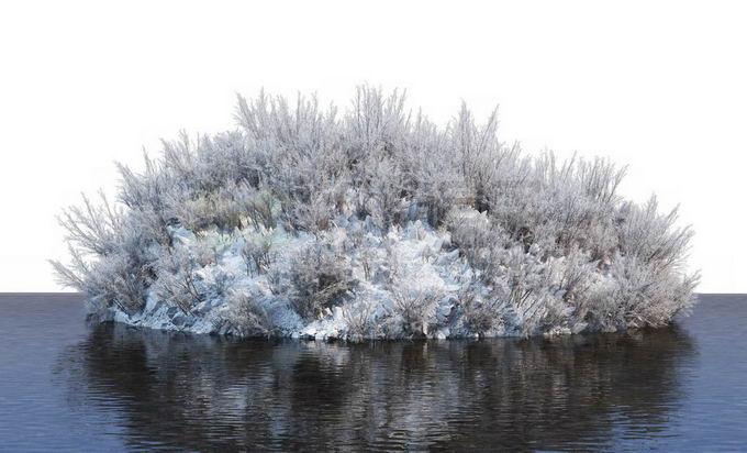 冬天被积雪覆盖的湖心小岛上的灌木丛和大树风景7634362免抠图片素材免费下载 生物自然-第1张